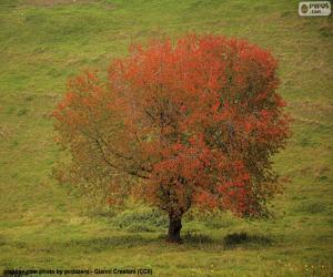 Puzle Strom na podzim