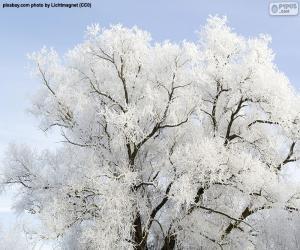 Puzle Strom potažený mrazem
