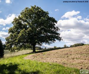 Puzle Strom v zorané