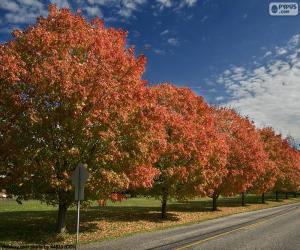 Puzle Stromy na podzim