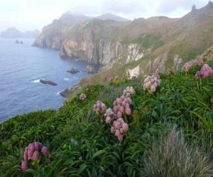 Puzle Subantarctic ostrovů, zahrnuje ostrovy Snares, Bounty, Antipodes, Auckland a Campbell, který se nachází v Jižním oceánu, jihovýchodně od Nového Zélandu.