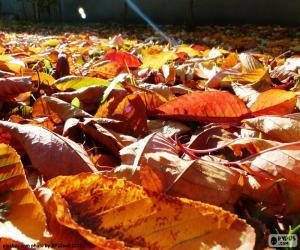 Puzle Suché listí na podzim