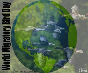 Puzle Světový den stěhovavých ptáků