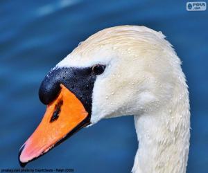 Puzle Swan hlava