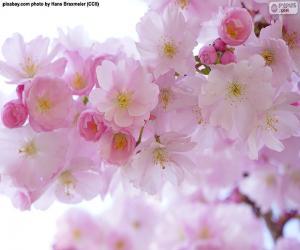 Puzle Třešňové květy