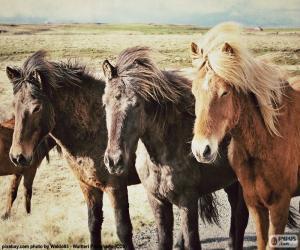 Puzle Tři Islandští koně