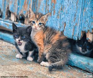 Puzle Tři koťata