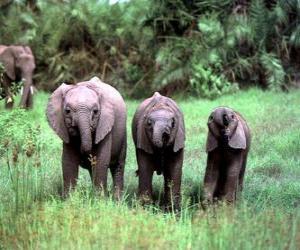 Puzle tři malé slony