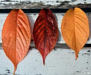 Puzle Tři podzimní listy