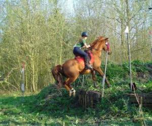 Puzle Technická Předmět jezdecké soutěže, testy porozumění mezi koněm a jezdcem pomocí různých testů.