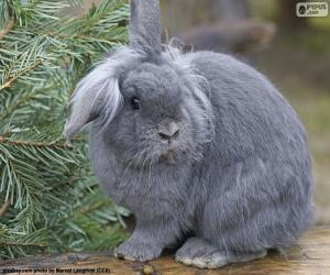 Puzle Trpasličí králík