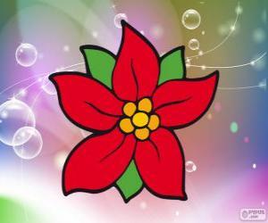 Puzle Vánoční květina