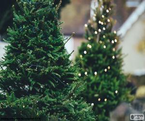 Puzle Vánoční stromky s osvětlením