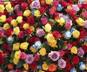 Puzle Vícebarevné růže