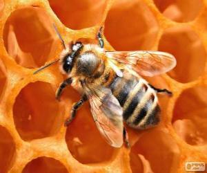 Puzle Včelí med. Včely, které produkují med