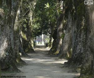 Puzle Velké stromy, Brazílie