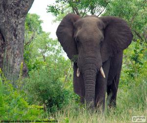 Puzle Velký slon v lese