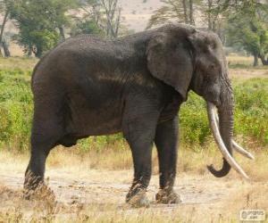Puzle Velký slon