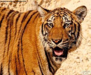 Puzle Velký tygr