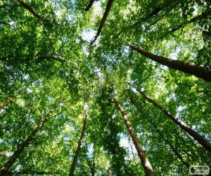 Puzle Vrcholky stromů