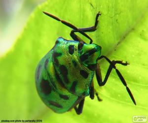 Puzle Zelený brouk