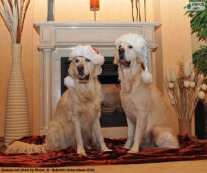 Puzle Zlatý retrívr, Vánoce