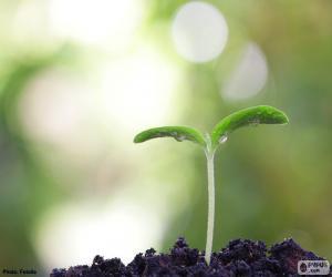 Puzle Zrození rostlina