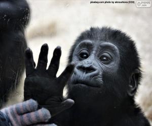 Puzle Zvědavé opice