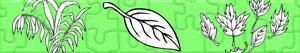 Puzzle Rostliny a Listy